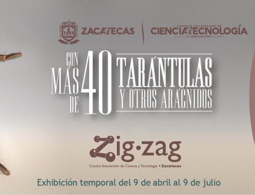 """Exposición temporal """"Aracno"""" en Zigzag"""